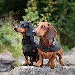 The story behind Dachshund Couture: From Bavaria to international dog chic